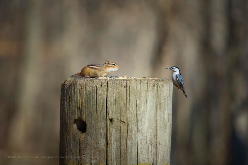 bird chipmunk meet standoff The Top 25 Pictures of the Day of 2014