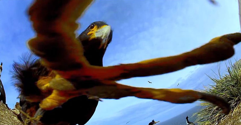 Bird Steals Camera and Proceeds to Take Amazing Footage