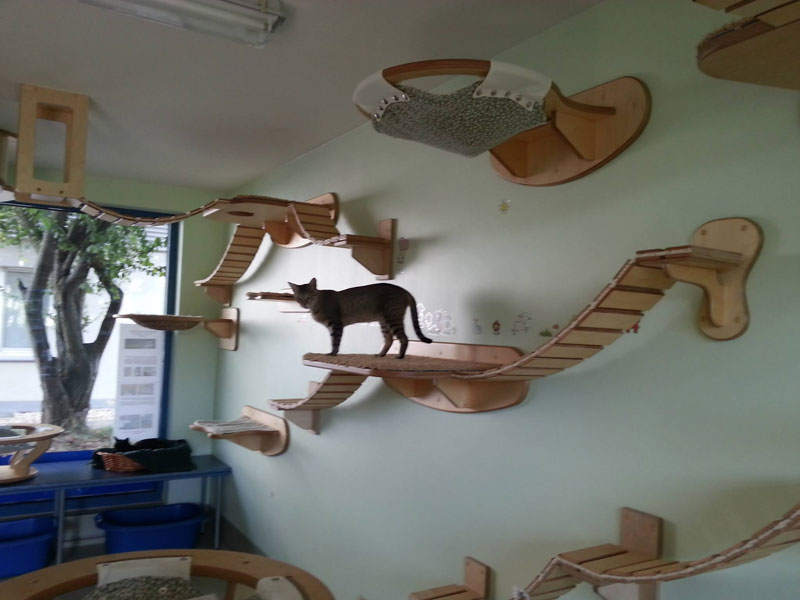 ceiling furniture for cats by goldatze gold paw (12)