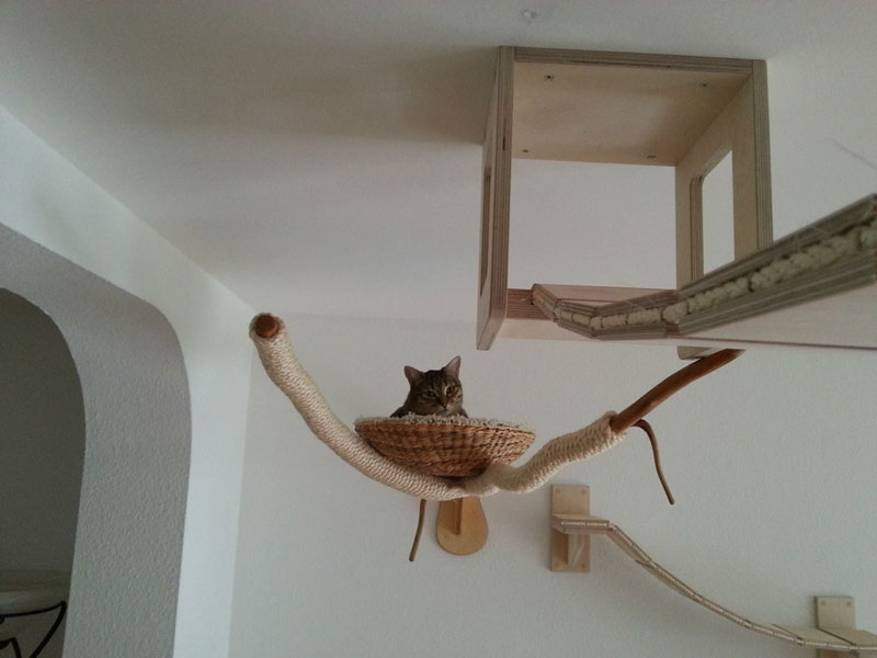 ceiling furniture for cats by goldatze gold paw (15)