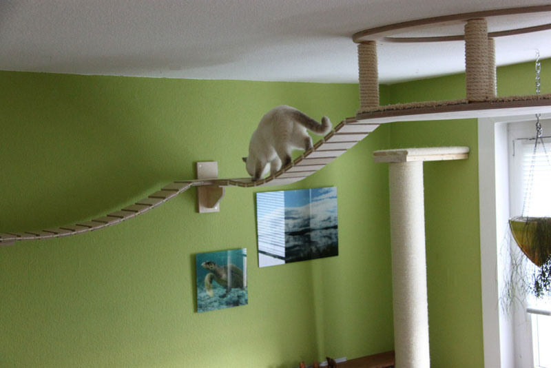 ceiling furniture for cats by goldatze gold paw (16)