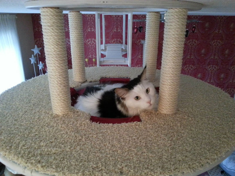 ceiling furniture for cats by goldatze gold paw (17)