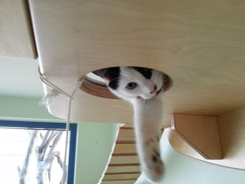ceiling furniture for cats by goldatze gold paw (3)