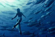 Picture of the Day: Freediving with Tunas