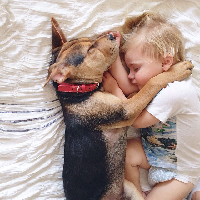 toddle naps with puppy theo and beau instagram (1)