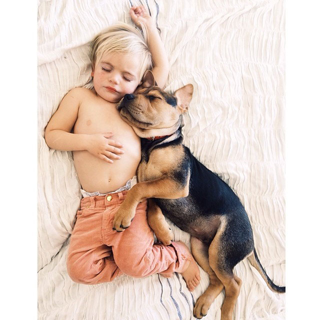 toddle naps with puppy theo and beau instagram (10)