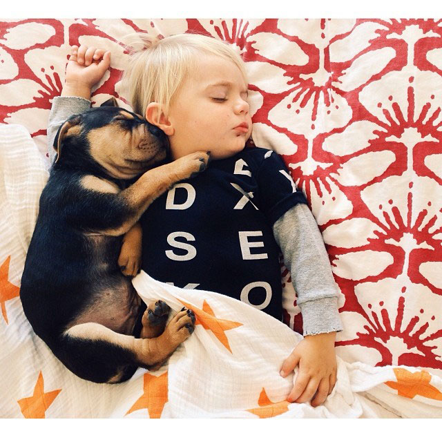 toddle naps with puppy theo and beau instagram (12)