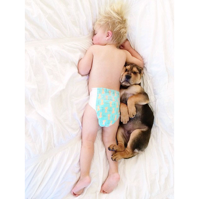 toddle naps with puppy theo and beau instagram (15)