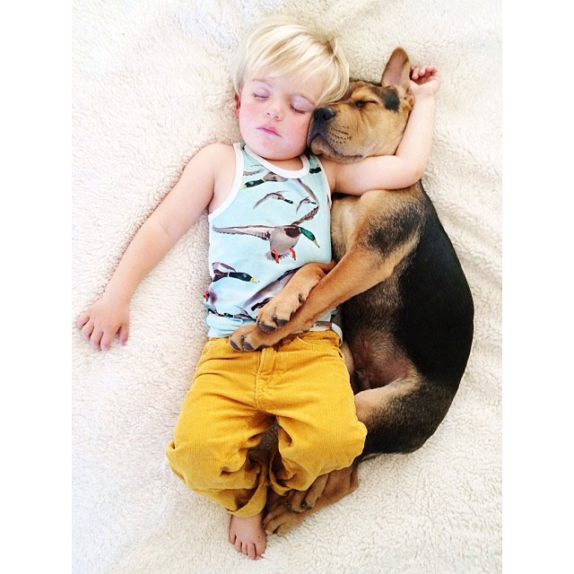 toddle naps with puppy theo and beau instagram (18)
