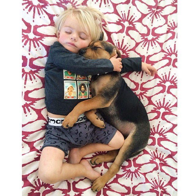 toddle naps with puppy theo and beau instagram (20)