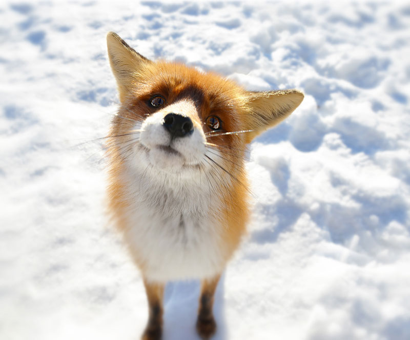 what does the fox say The Top 25 Pictures of the Day of 2014