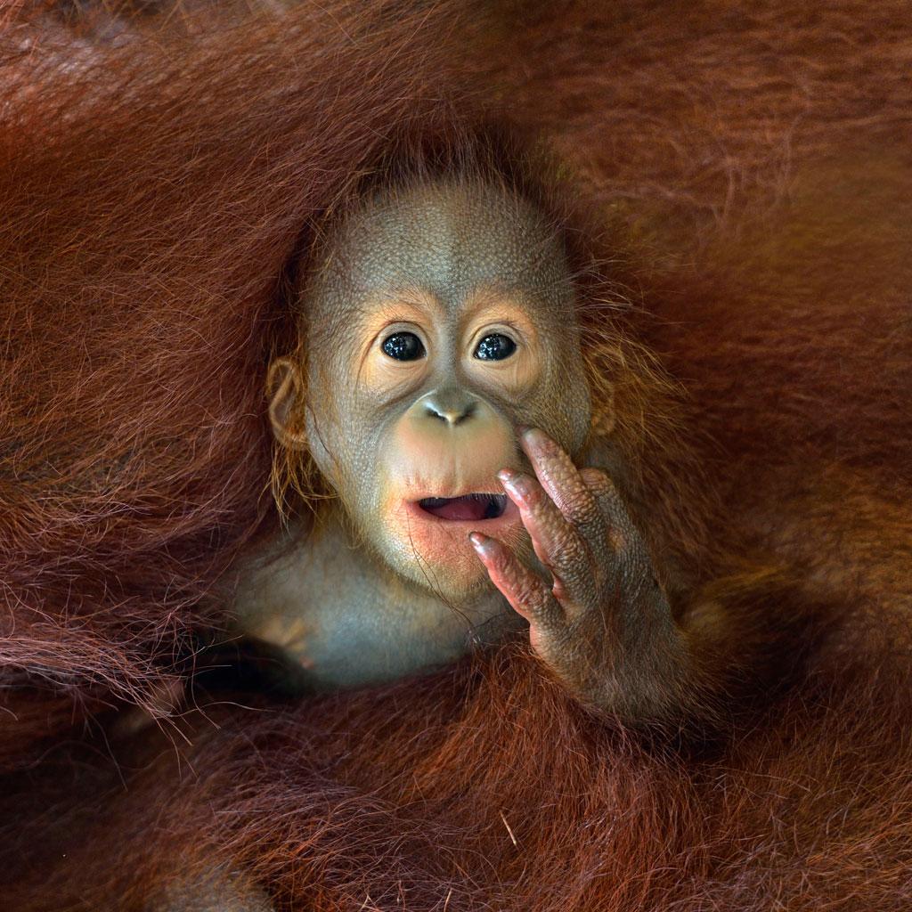 ChinBoonLeng_Singapore_Shortlist_Open_Nature&Wildlife_2014