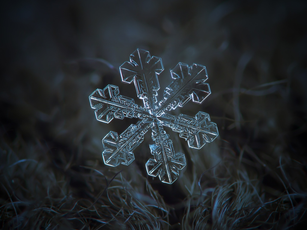 Picture of the Day: A Single Snowflake