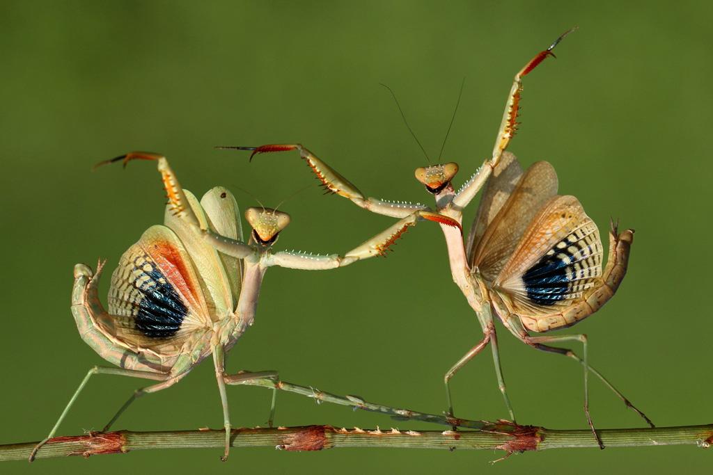 HasanBaglar_Cyprus_Shortlist_Open_Nature&Wildlife_2014