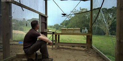 This Problem-Solving Crow is Blowing My Mind