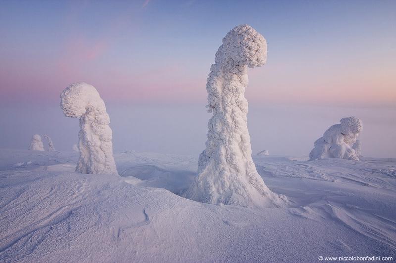snow covered trees finnish lapland apod by niccolo bonfadini