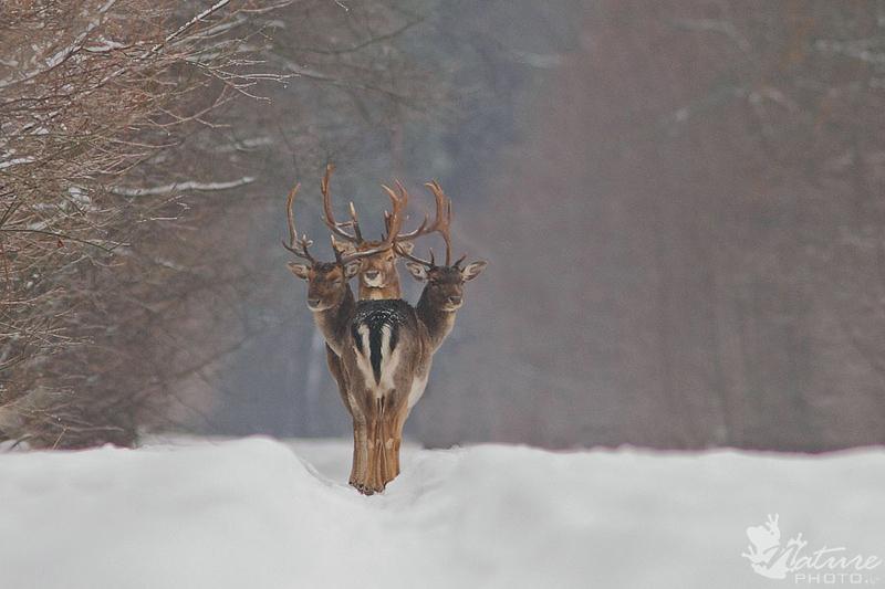 three deer perfect timing Picture of the Day: Deer Oh Deer Oh Deer