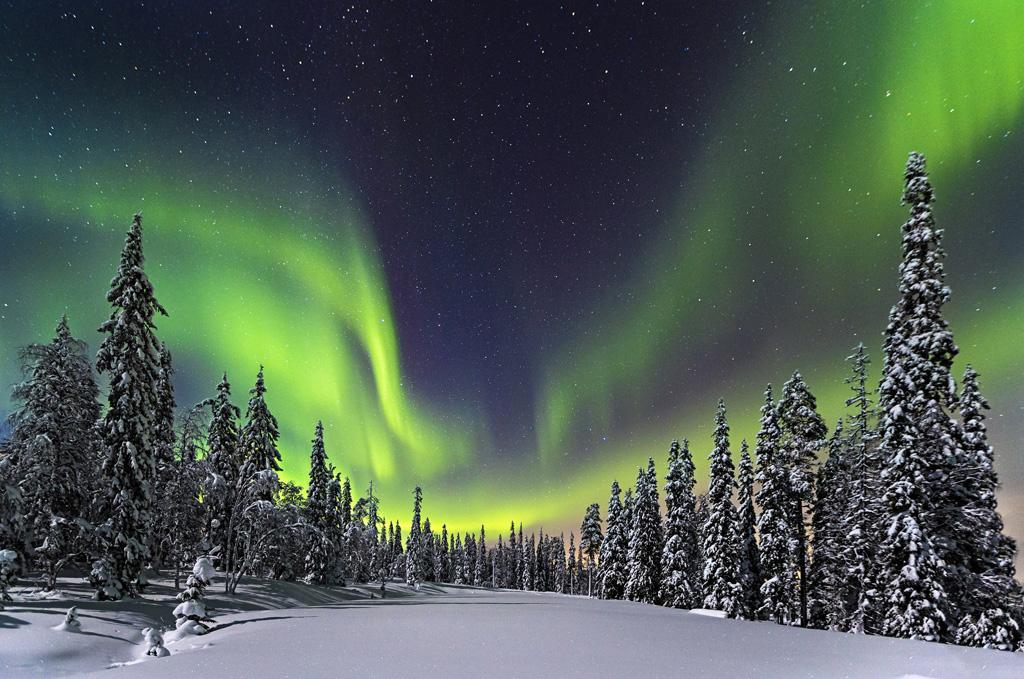 06-Forest-Lights