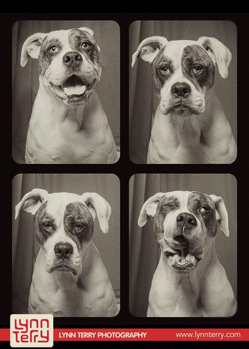 dogs in photo booths by lynn terry (1)