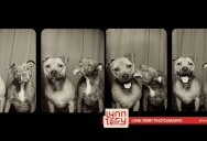 10 Reasons Why 'Dogs in Photo Booths' is the Best Idea Ever