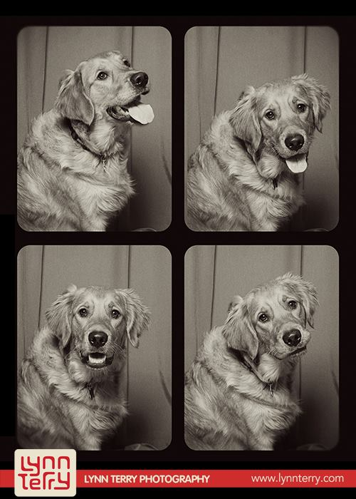 dogs in photo booths by lynn terry (9)