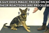 Magic Tricks for Dogs