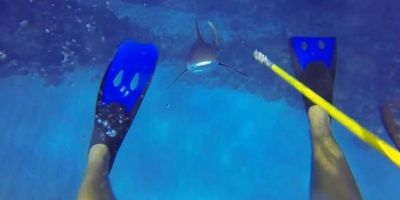 This Diver Survived a Shark Attack and He has the GoPro Footage to Prove It