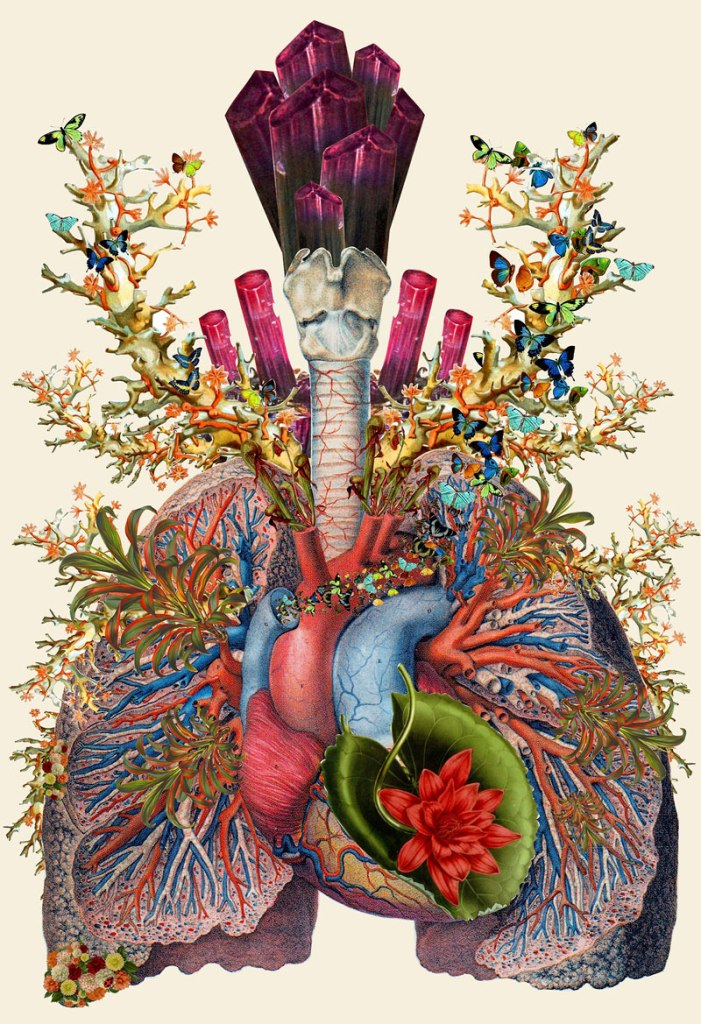 Surreal Anatomical Collages by Bedelgeuse