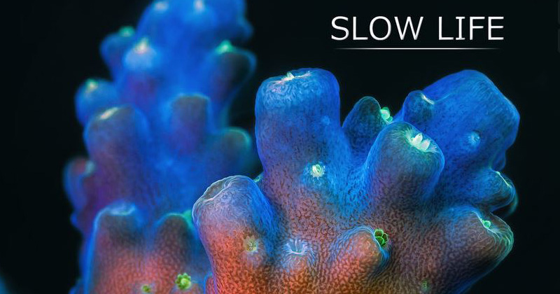 The-Unseen-Beauty-of-Slow-Moving-Marine-Life.-A-150,000-Photo-Time-Lapse