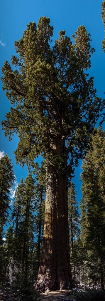 Picture of the Day: General Sherman