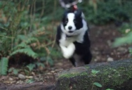 This Might Be the World's Fastest Trail Dog