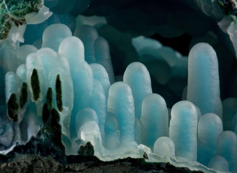 Chalcedony on Chrysocolla in malachite diglet super mario mineral (2)