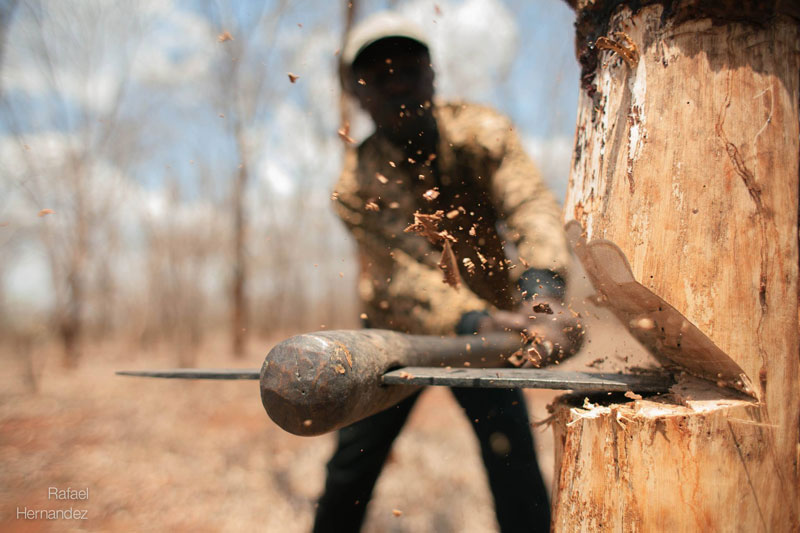 close up of axe chopping tree rafael hernandez Picture of the Day: When Axe Meets Wood