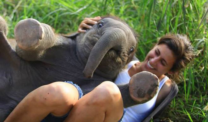 cute baby elephant The Shirk Report   Volume 260
