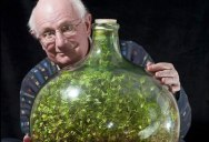 This Sealed Bottle Garden Hasn't Been Watered Since 1972