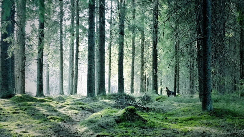 forest jyvaskyla finland Picture of the Day: Forest Green