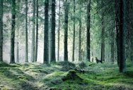 Picture of the Day: Forest Green