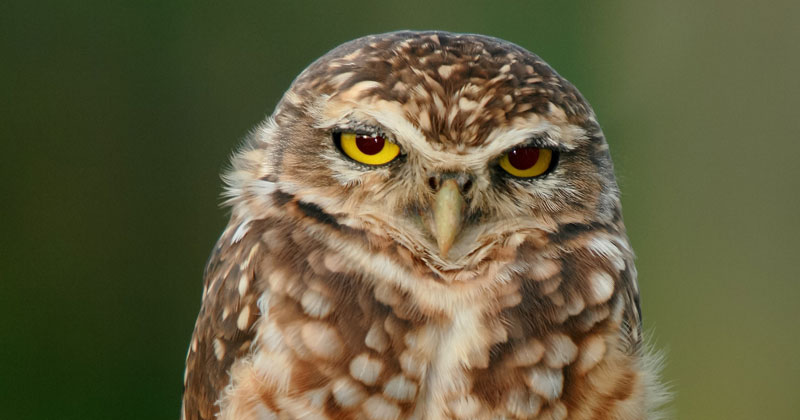Picture of the Day: Just an Owl Standing on One Foot