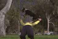 Just a Slow Motion Video of a Dog Doing Parkour