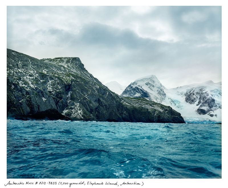 the oldest living things in the world by rachel sussman (1)
