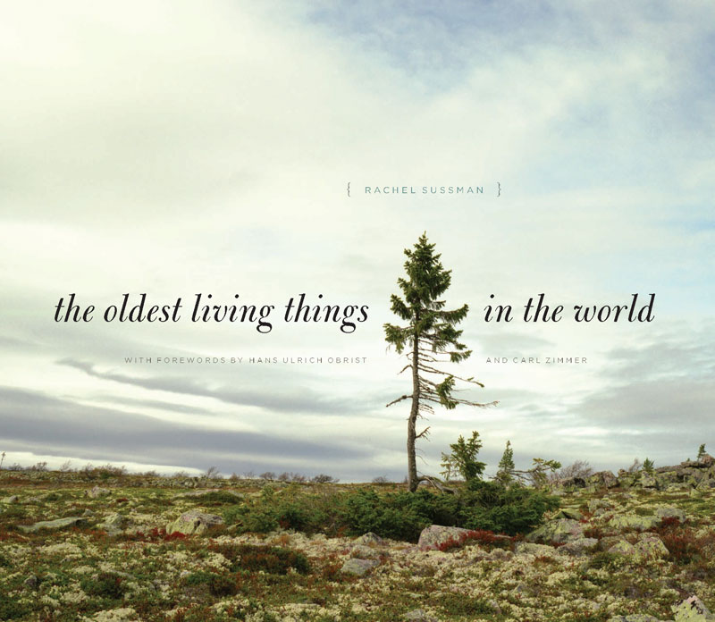 the oldest living things in the world by rachel sussman (2)