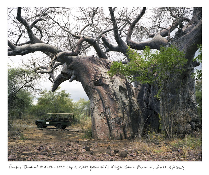 the oldest living things in the world by rachel sussman (3)
