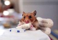 A Tiny Hamster Eating Even Tinier Burritos