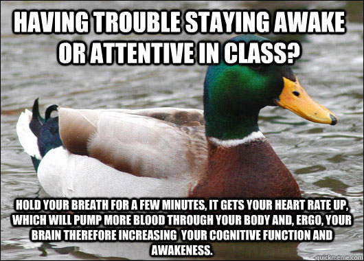 tips from the worlds smartest duck best of actual advice mallard (11)