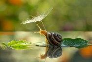 A Snail's Life by Vyacheslav Mischenko