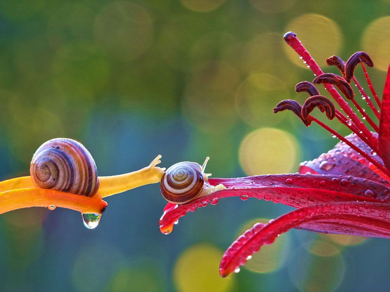 unseen world and beauty of snails by Vyacheslav Mischenko (3)