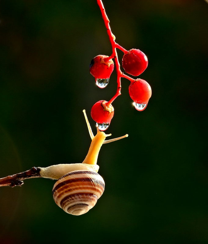 unseen world and beauty of snails by Vyacheslav Mischenko (5)