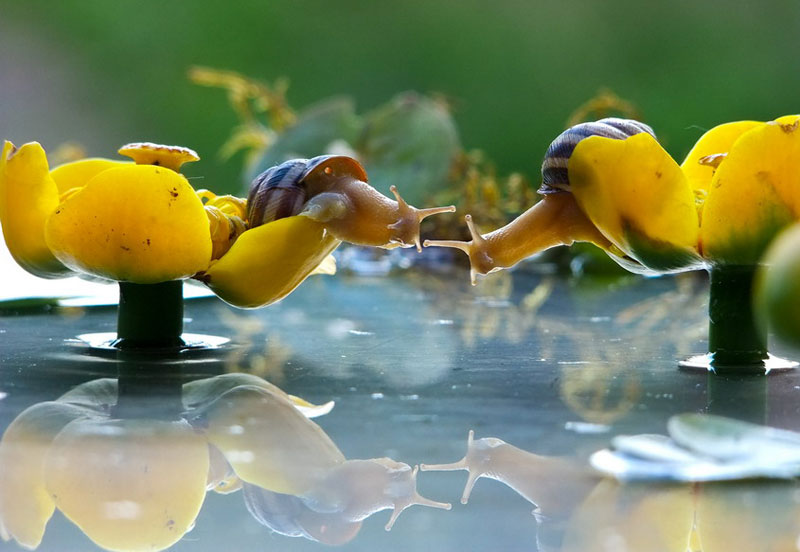 unseen world and beauty of snails by Vyacheslav Mischenko (7)
