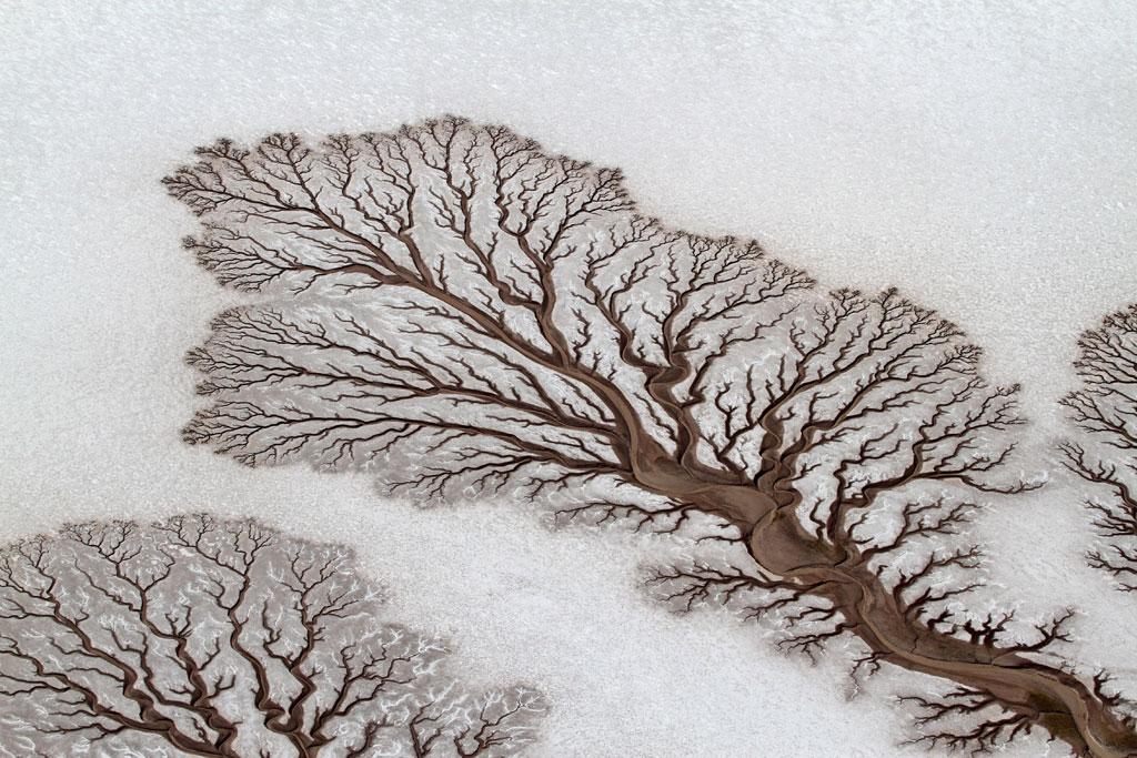 04-Tree-like-rivers
