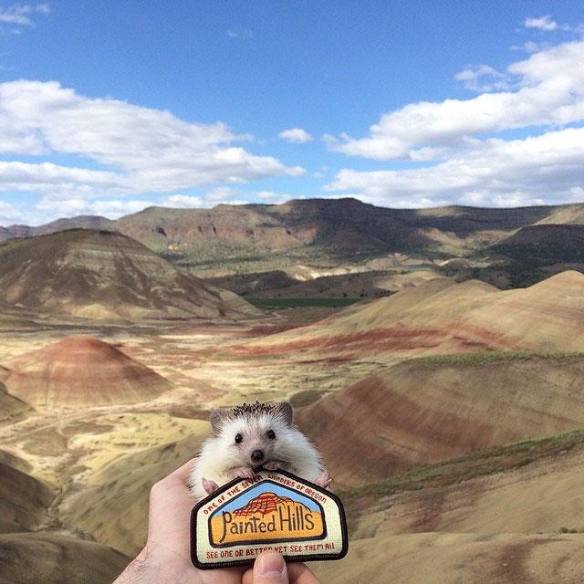 biddy the hedgehog world traveler instagram (12)